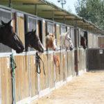 kone čakajú na svojich nových jazdcov
