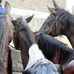 večer už boli konenašich jazdcov  späť v jazdeckej škole Circolo  Ipicco Talus